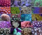 Mixed Frag Pack 10 Corals with FREE Shipping
